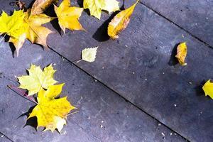 foglie autunnali su assi di legno