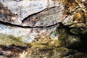 vecchio ceppo di legno tagliato superficie