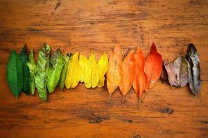 solo un mucchio di foglie