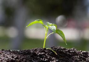 giovane pianta in crescita