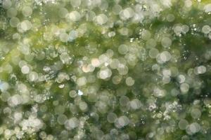 sfocatura dello sfondo dalle piante sotto la pioggia
