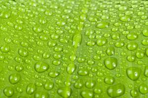 gocce d'acqua sulla foglia della pianta verde
