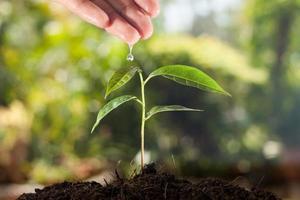 mano del contadino che innaffia una pianta giovane con sfondo verde bokeh