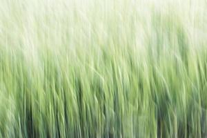 sfondo astratto grano
