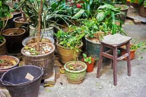 piante in vaso foto