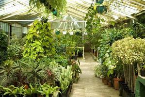 vista delle piante in serra al vivaio foto