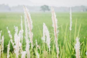 Close up di fiori di campo e piante in campo soleggiato