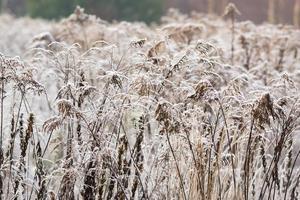 gelo a terra sul prato. brina sulle piante. foto