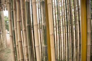 bambù naturale