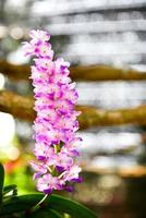 orchidea foto