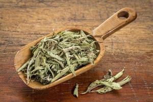 foglie essiccate di stevia foto