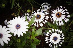 flores de mexico para el mundo foto