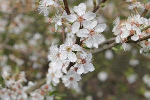 fiorire foto