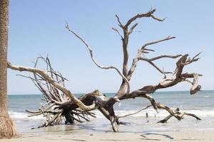 albero di legni su una spiaggia
