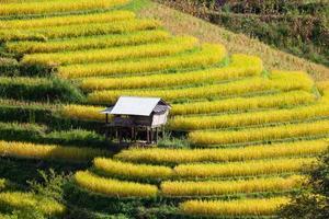 campo di riso terrazzato verde al divieto pa bong peay