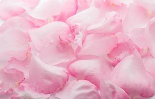 petali di rosa. foto