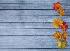 foglie di autunno sfondo del ringraziamento