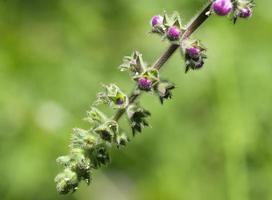 fiori selvatici ricoperti di rugiada