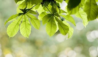 sfondo di foglie di primavera