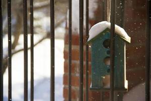 casa degli uccelli in inverno foto
