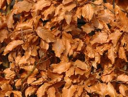 foglie foto