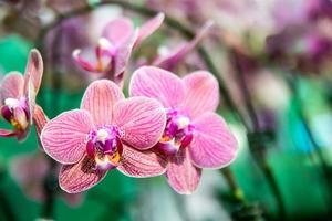 bellissimo fiore di orchidea tailandese
