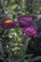 fiori di carta foto