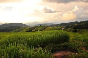 campi di riso terrazzati paesaggio sulla montagna
