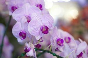fioriture di orchidee foto