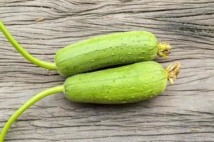 zucca spugna verde