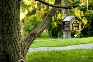 parco su mangiatoia in legno per uccelli foto