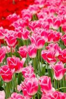 giardino di primavera foto