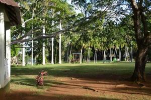 jardin balfour, beau bassin, mauritius foto