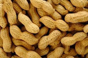 arachidi su sfondo bianco