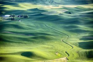 paesaggio della fattoria nel palouse foto