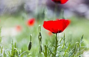 priorità bassa del fiore