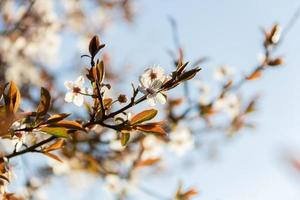 ramoscello fiorito
