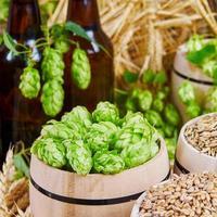 ingredienti della birra in botti