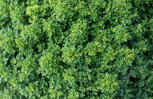sfondo della flora foto
