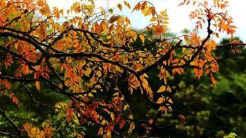 ramo di un albero con foglie rosse