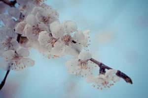 Cina classica - primavera