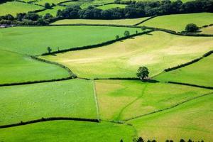 campi verdi in campagna