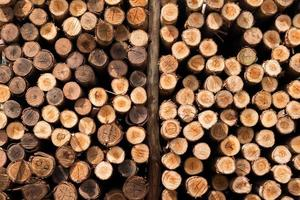 primo piano di una pila di tronchi di legno