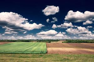 paesaggio rurale con campo di grano in una giornata di sole