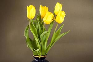 tulipani gialli su una superficie grigia