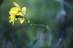 fiore di orchidea terra