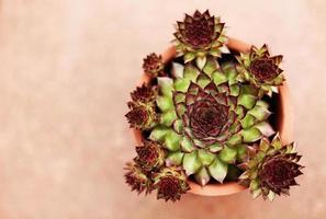 piante grasse in vaso di terracotta foto