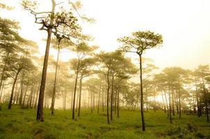 bellissimo albero di pino foto