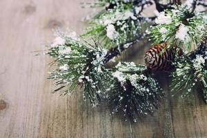 ramo di un albero di pino di Natale foto