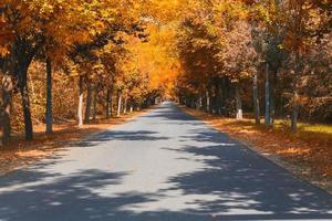 strada d'autunno